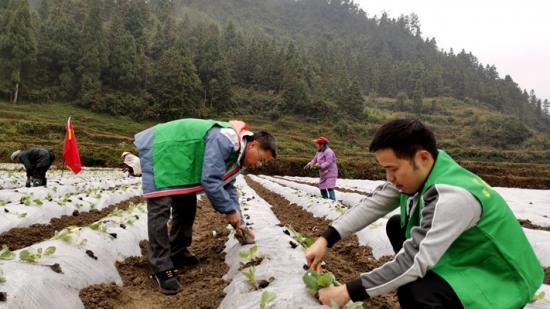 镇远双坝村:扶贫农场干群忙 产业发展有保障
