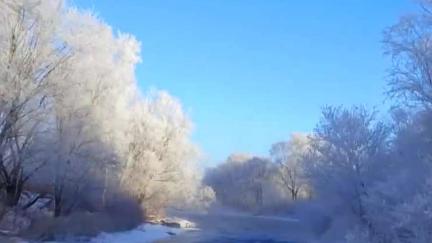 库尔滨河现雾凇,玉树琼花美如仙境