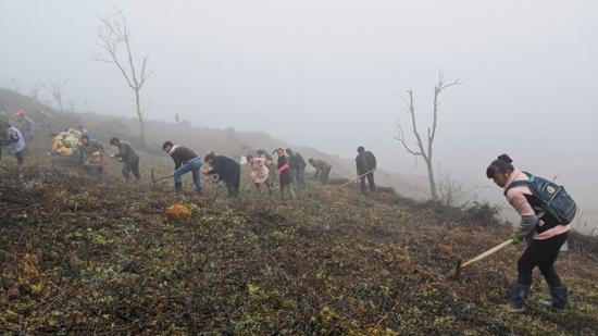 大方:冬耕好时节 千亩茶树栽种忙