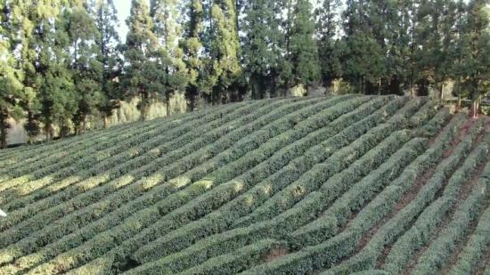 【喝着,喝着,春天就来了】茶园茶人茶事,听听他们的2020小目标
