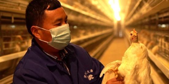"""【贵州农村产业革命连连看】镇远县:69家合作社""""社社联合""""抱团发展"""