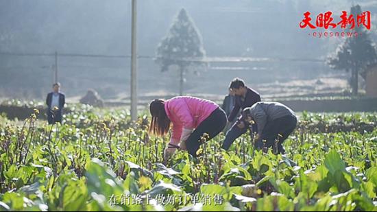 黔西县协和镇巩固脱贫成效 让人民不断收获幸福感