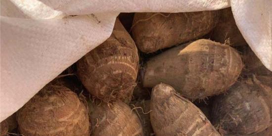 【贵州农村产业革命连连看】合作社找销路 小芋头畅销省外