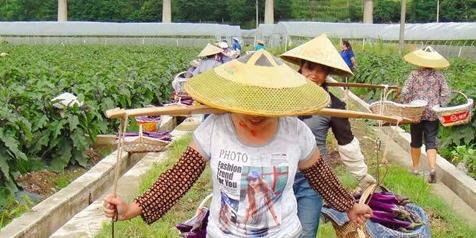 【贵州农村产业革命连连看】黔南州都匀市墨冲镇良亩村良田坝区  每天30吨蔬菜发往大湾区
