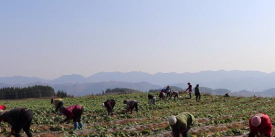 【贵州农村产业革命连连看】吴龙会:家门口务工日子好起来