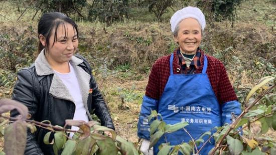 【贵州农村产业革命连连看】党支部带着干  金银花满园香