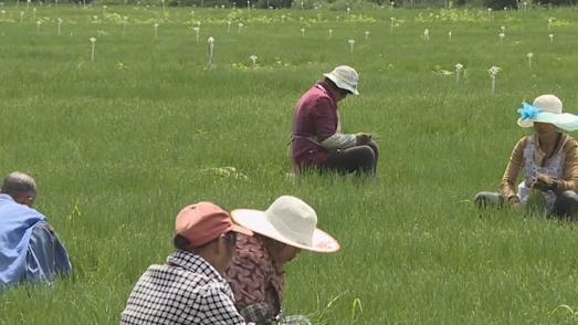【贵州农村产业革命连连看】党建引领 打造农旅一体化