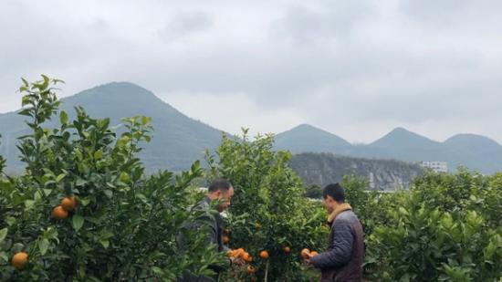 【贵州农村产业革命连连看】支部引领解难题 多元产业增效益