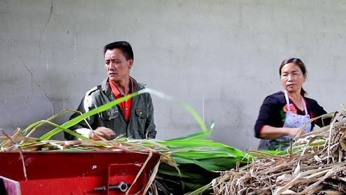 【贵州农村产业革命连连看】回乡带领大家一起奔小康