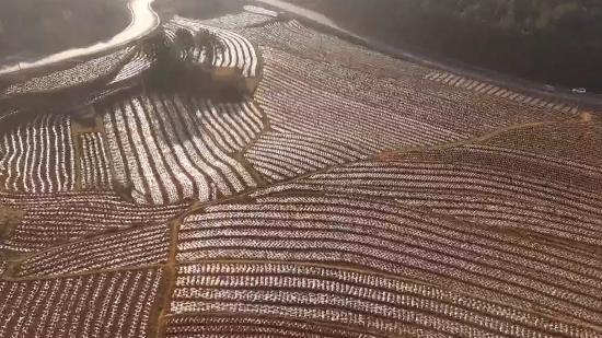 威宁:抢农时忙农事 15万亩早熟马铃薯种植接近尾声
