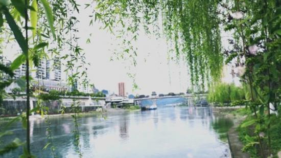 乌江国家湿地公园:花柳枝头春意闹