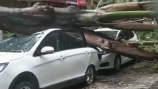 """6号台风""""米克拉""""登陆福建:强风暴雨刮倒大树,吹飞彩钢板"""