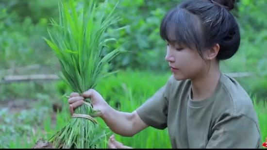 300秒!李子柒帶你看完水稻的一生