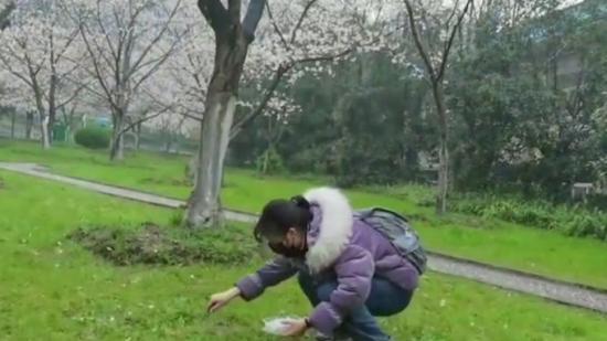 武大研一女生做櫻花瓶寄給校友:彌補去年畢業季的遺憾