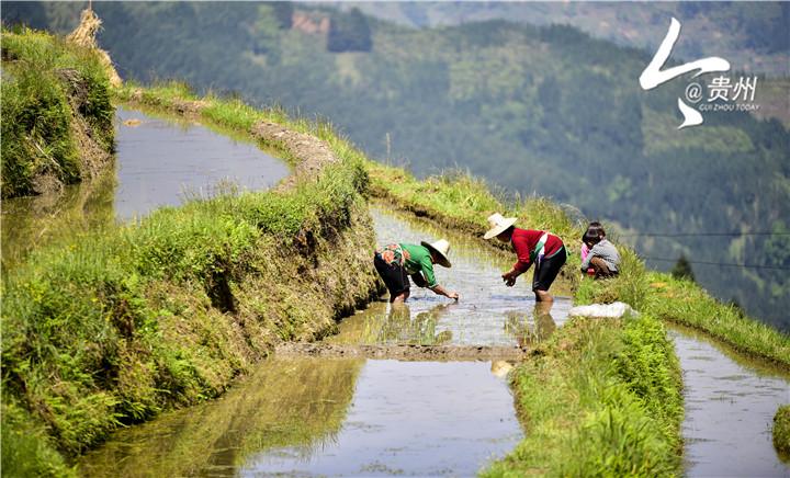 从江县翠里瑶族壮族乡南丰梯田开始灌水,弯弯曲曲的梯田在阳光照耀下