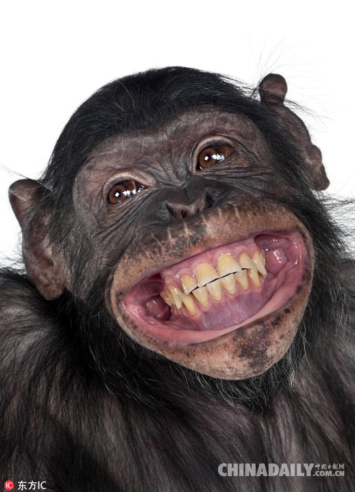 大猩猩咧嘴笑的井盖表情包图古灵表情图片