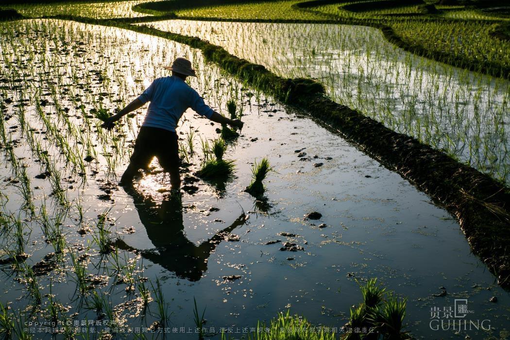 5月16日,大方县小屯乡小屯梯田风景如画,农民在田间忙着插秧施肥.
