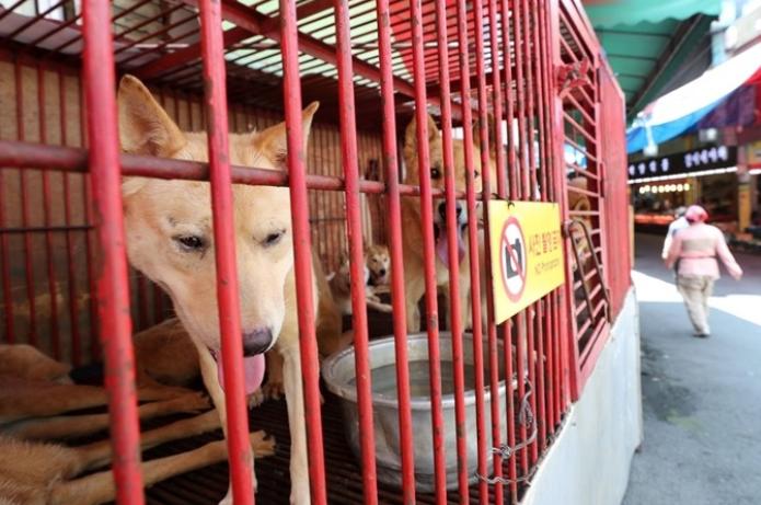 韩国首尔全面停止屠狗:市长一声令下,11家屠狗场全关门!